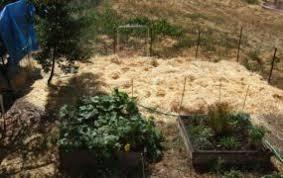 Garden Mulch Types - 12 garden types acadrp org garden ideas
