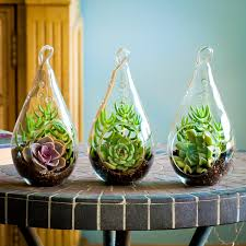 sealed bottle garden all about terrariums space gardening space gardening