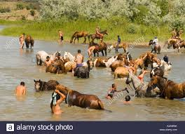 Cool Stock by Custers Last Stand Reenactment Crow Indian Reservation Warriors