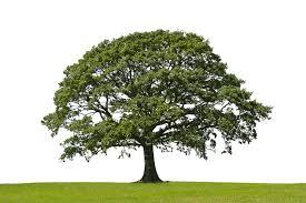 success like a tree