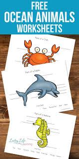 515 best ocean theme images on pinterest sensory activities