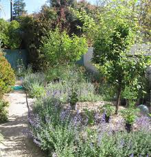Southern California Botanical Gardens by Southern California Gardening Soften Your Hardscapes