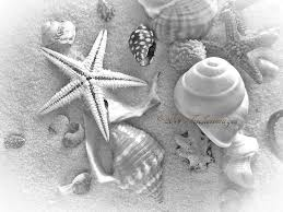 Starfish Home Decor Black White Seashells Starfish Cluster Wall Art Home Decor