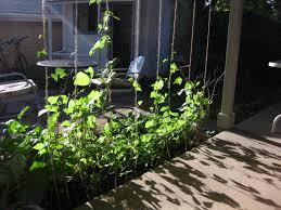 the herbangardener tomatoes