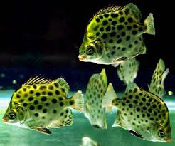 ornamental fish is a challenging business the hindu