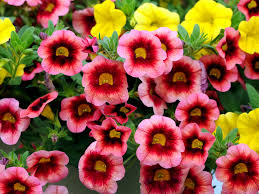 8 annuals that are perfect for container gardening