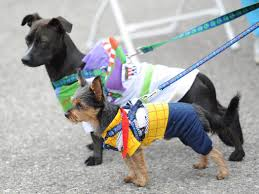 pet halloween costumes uk 10 dog halloween costumes we u0027d quite like for ourselves mtv uk