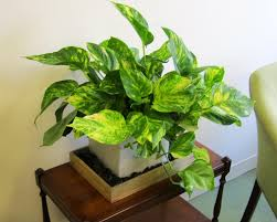 modern indoor planters ideas home decor inspirations