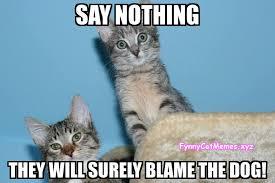 Cat Meme Funny - funny cat memes the best funny cat memes slapwank