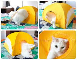 Come Costruire Una Casetta Per Conigli by Come Costruire Una Cuccia Tenda Per Il Nostro Gatto Con Due
