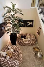 chambre pour chien où faire dormir chien où faire dormir panier pour