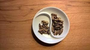 insecte cuisine michel collin sur m6 la cuisine des insectes