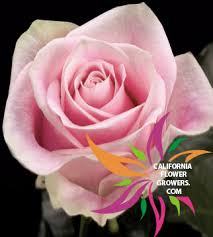 Bulk Flowers San Diego Florist U0026 Carlsbad Florist Flower Delivery In San