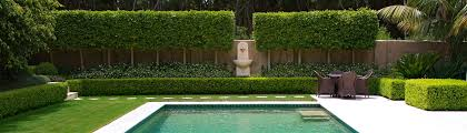 Landscaping Around Pools by Pleached Ficus Hillii With Trachelospermum Jasminoides Create A