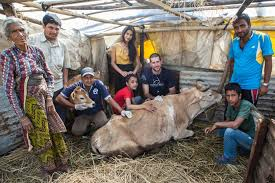 earthquake update world vets responds to nepal earthquake animal rescue updates