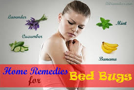 What Kills Bed Bugs Naturally 19 Natural Home Remedies For Bed Bugs Bites