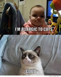 Allergy Meme - i m allergic to cats weknowmemes