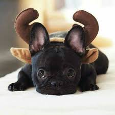 Frenchie Halloween Costume 86 Dog Costumes Halloween Images Animals