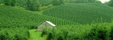 hart t tree farms a tree farm