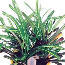 7 best houseplant care images on pinterest cleaning tips exotic