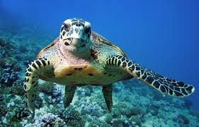 8 animals you can only see under the sea eco companion blog