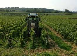 The Trellis And The Vine Burgundy Year