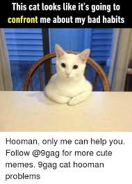 Cat Problems Meme - this cat looks like it s going ta confront me about my bad habits