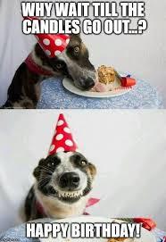 Happy Birthday Meme Dog - 9 best birthday quote images on pinterest funny happy birthday
