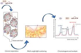 multi angle light scattering coupling multi angle light scattering to ion exchange chromatography