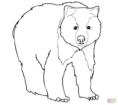 young grizzly bear free coloring page animal easy grizzly