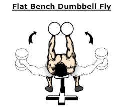 Flat Bench Press Dumbbell 28 Flat Bench Dumbbell Google Images Elitefts Scholastic
