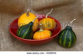 small orange and green ornamental gourd with fallen autumn leaves
