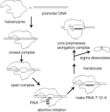 part three gene expression and protein synthesis