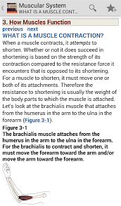 download the muscular system manual the skeletal muscles of the
