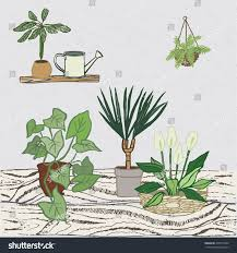 home plants home plants card stock vector 459416902 shutterstock