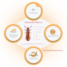 Powder Post Beetles In Hardwood Floors - powdery facts about powder post beetles bug and termite treatment