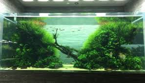 Amano Aquascaping Takashi Amano Aquascaping Guru Dies At 61 Years Old