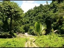 amazing sound effects jungle night jungle night sound