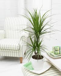 easy indoor plants 5 easy growing indoor plants for beginners garden of eady