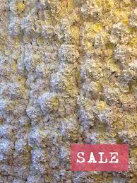 backdrops for sale 8 best highlife asia floral backdrops and flower walls images on