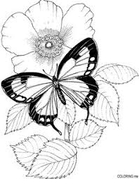 butterfly stands plant coloring gif 1 024 1 500 pixels