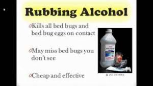 how can you get rid of bed bugs how to get rid of bed bugs prince george s county md bug defender