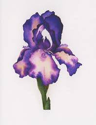 watercolor notecards patsy barry watercolor notecards purple iris flowers