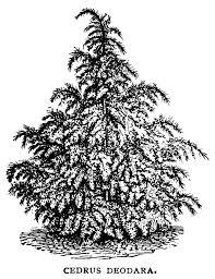 vintage christmas tree vintage christmas tree drawing cheminee website