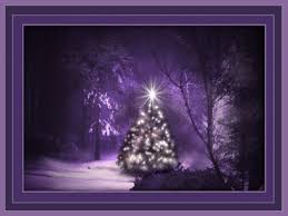 winter christmas tree forest purple snow winter lights night