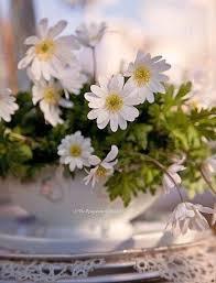 Daisy The Flower - 826 best marguerite images on pinterest daisy flowers flowers