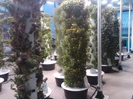 Home Vertical Garden by How To Grow A Vertical Garden Beautiful How To Grow A Vertical