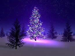 forests tree sky night lights stars christmas snow forest