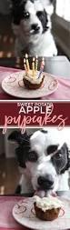 6595 best best friend dog images on pinterest dog food recipes