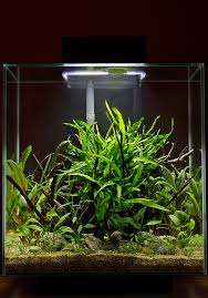 Aquascape Inspiration Low Maintenance Fluval Edge 46 Litre Uk Aquatic Plant Society